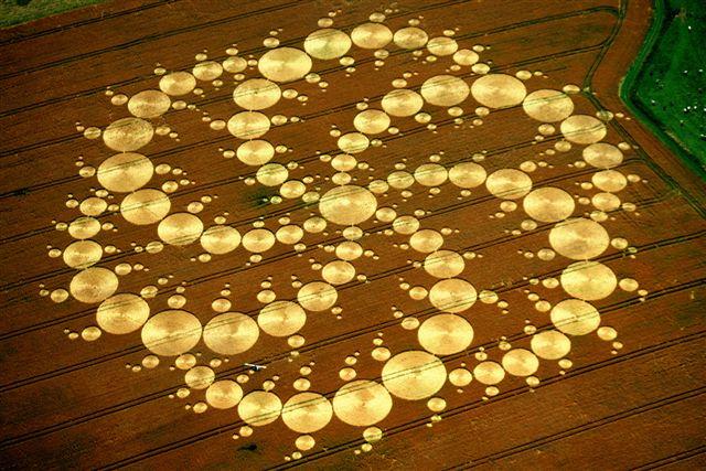 De Nieuwe Levensbloem. Graancirkelformatie met armen van telkens dertien hoofdcirkels,op 13 augustus 2001 gevonden bij Milk Hill in de buurt van Alton Barnes. Foto van Janet Ossebaard.